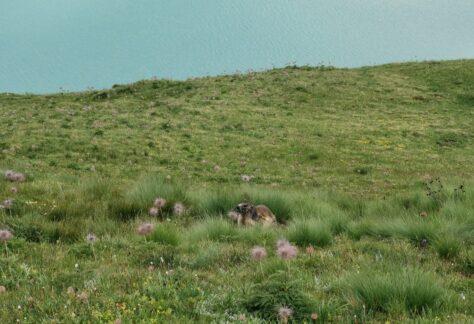 Val Formazza Pampa trek (16)