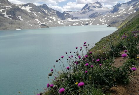Val Formazza Pampa trek (22)